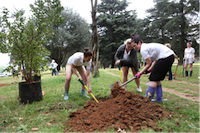 Planting trees at the park